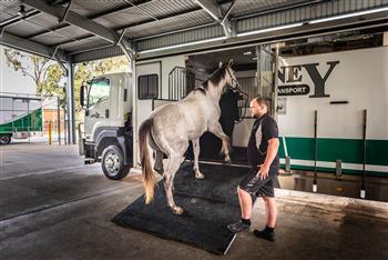 Sydney Horse Transport selects Allison Transmission